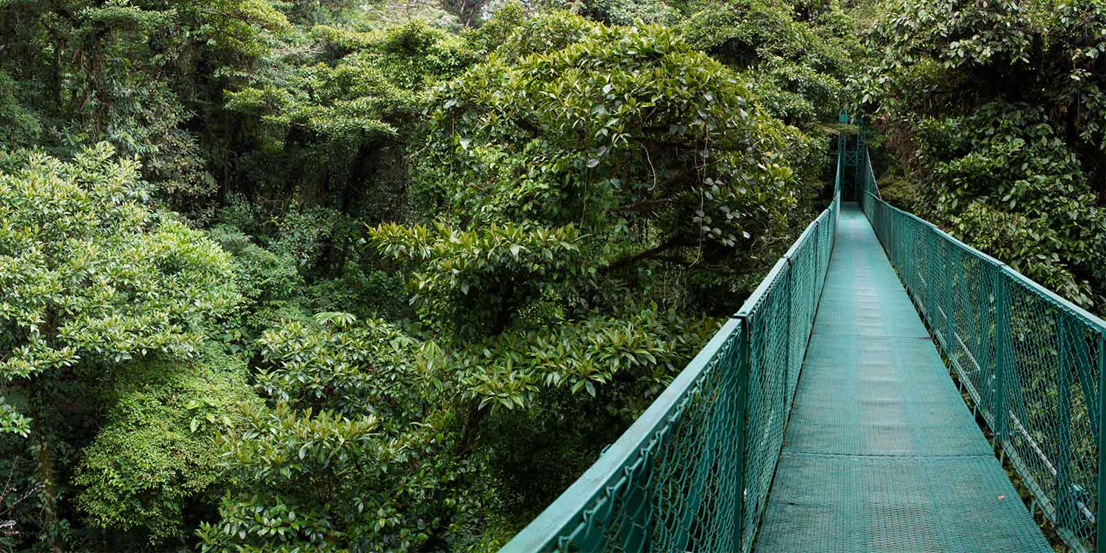 Cloud forest canopy walkway in Costa Rica