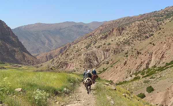 Mules and muleteers in Ait Bouguemez Valley in Atlas Mountains of Morocco