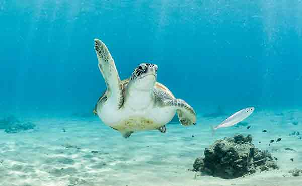 Turtle on seabed in Bahamas