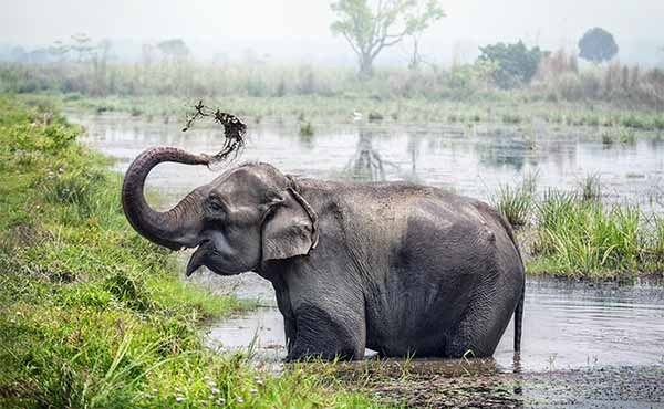 Elephant washing itself in a river in Chitwan