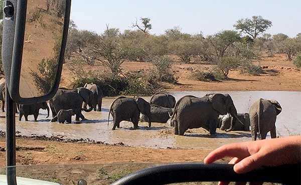Elephants in Kruger National Park, wing mirror and steering wheel in foreground