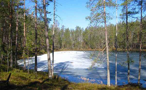 Frozen lake surrounded by pine forest in Hossa National Park