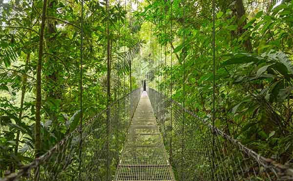 Canopy walkway in Costa Rican cloud forest