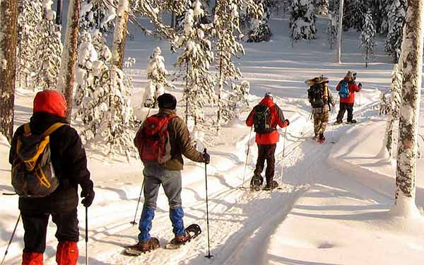 School group cross-country skiing through a Finnish forest in winter